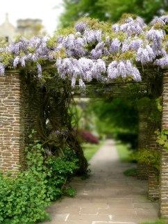 Flower Garden by Anna Langova